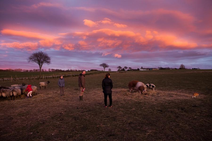 farm during sunset
