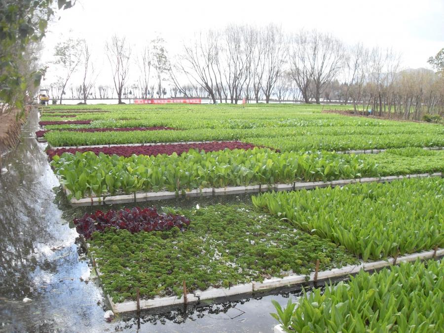 Hydroponic farm in China's Yunnan province