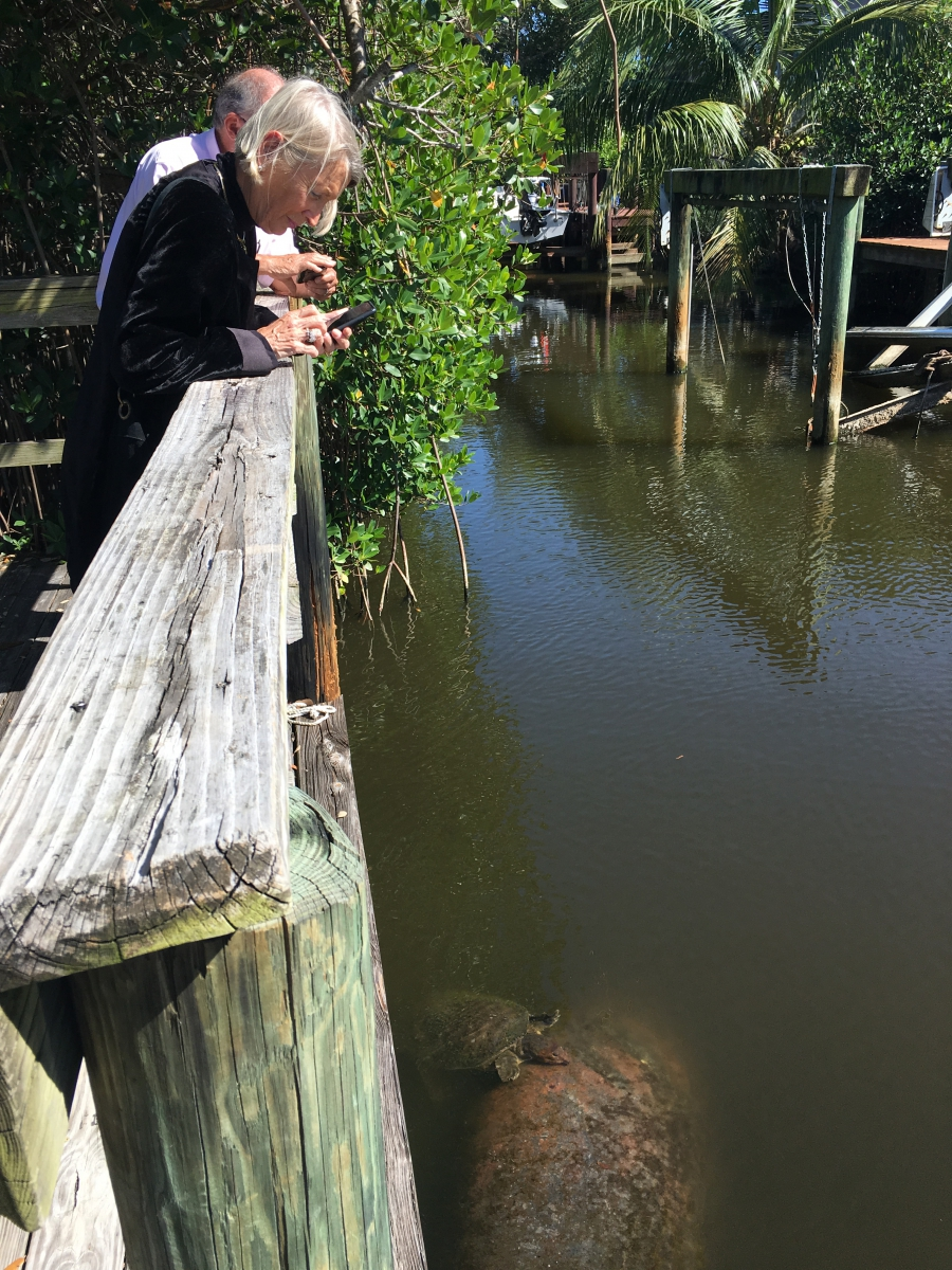 "Lynn Bauer and Harold Wanless peer off a boardwalk at a manatee and sea turtle wallowing in a lagoon in Satellite Beach. ""What a great place to live,"" Wanless says, except ""[it's] a place that's now too vulnerable"" for people to live in much longer."