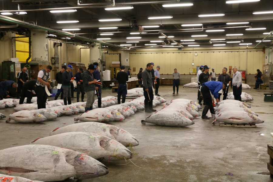 "Tsukiji fishsellers inspect giant tuna before the dawn auction. ""People with sense can tell the quality of the fish right away,"" says wholesaler Eiji Kusumoto."