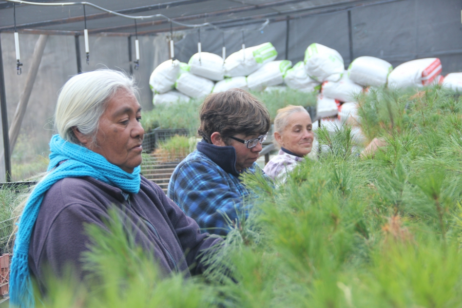 Women in the Laguna de Sánchez community run a nursery growing baby pine trees to be used in the Nature Conservancy's projects. The women harvest seeds from trees in the mountains.