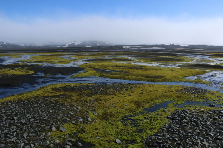Only the most tenacious of organisms can survive the conditions of the Iceland Highlands, like this moss hugging the ground.