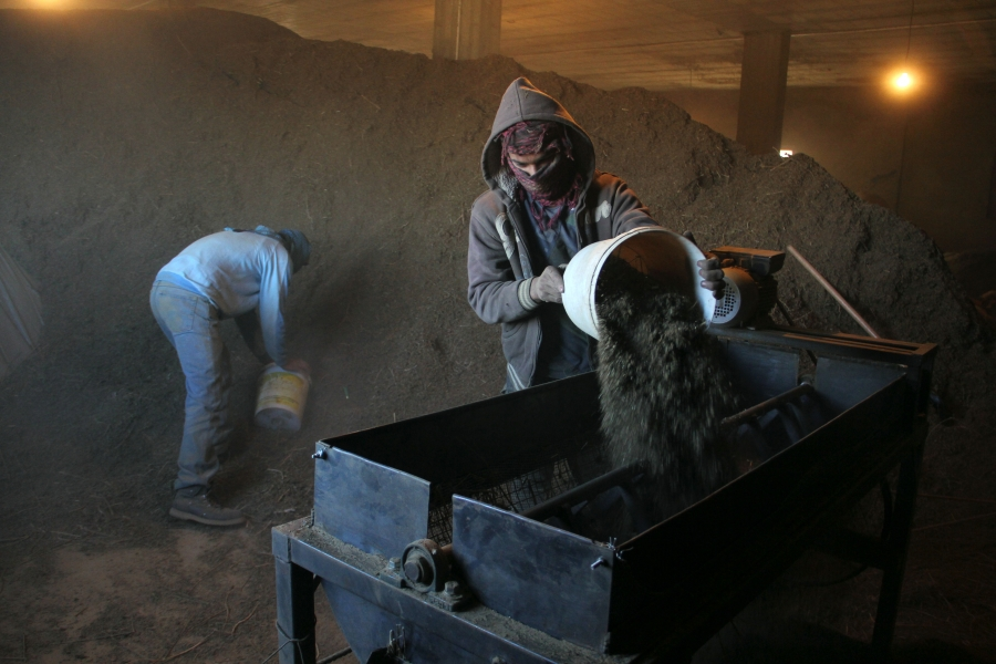 Workers in Shamas's hashish factory pour cannabis roughage in to a sifting machine.