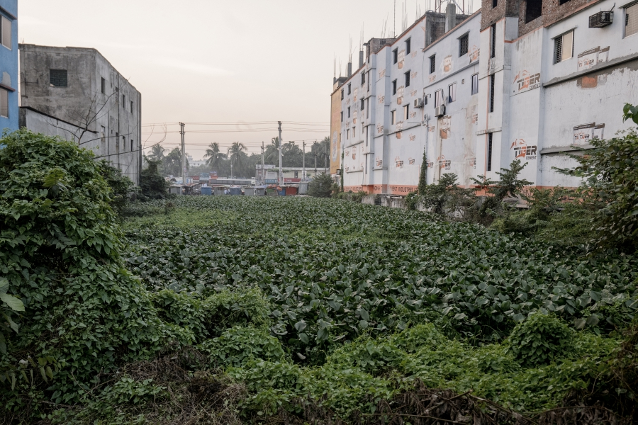 Empty lot with shrubs growing in the open area where Rana Plaza used to be.