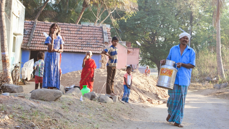 In India, most milk is collected in small amounts by rural farmers scattered across the country.