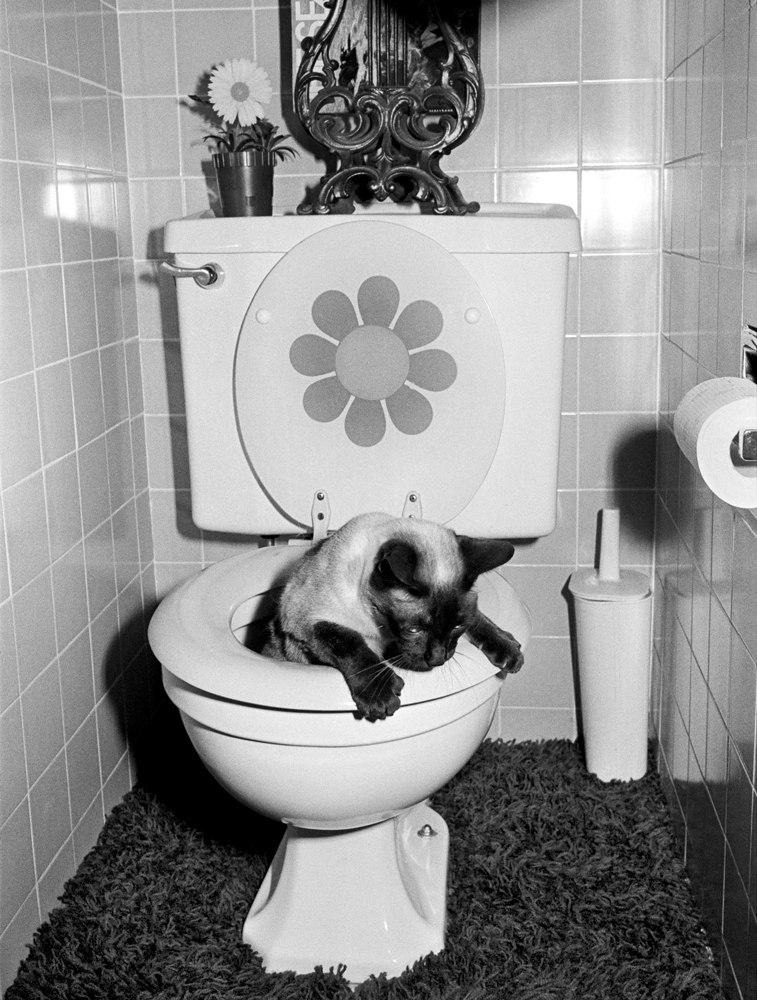 Chop Chop, the Jang family cat, using the toilet. As for shag carpet in the bathroom? Bad idea.