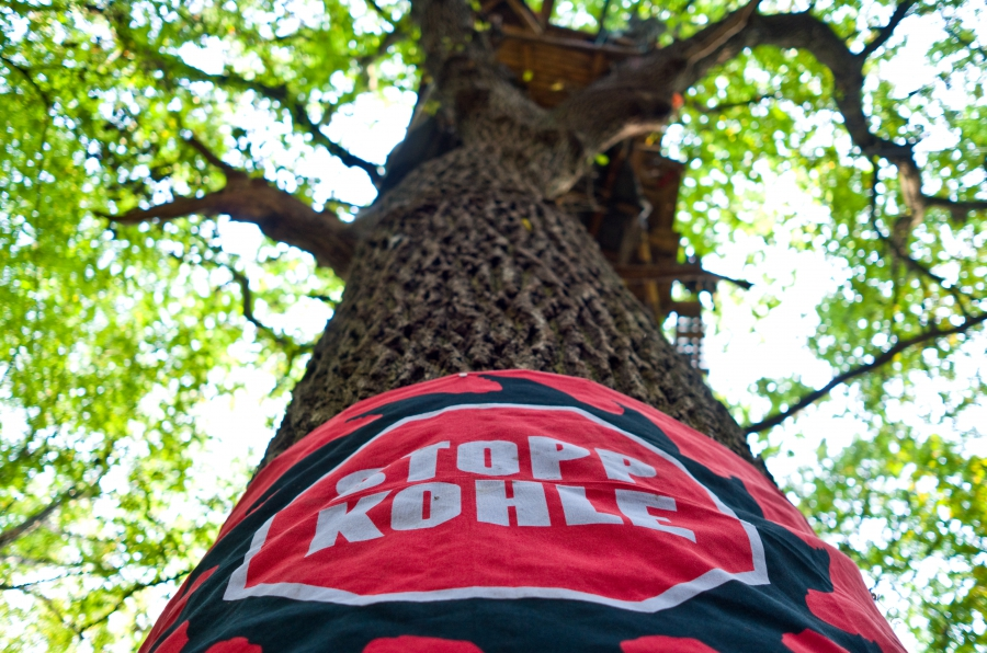 """A banner around an oak tree in the ancient Hambach forest reads """"stop coal."""""""