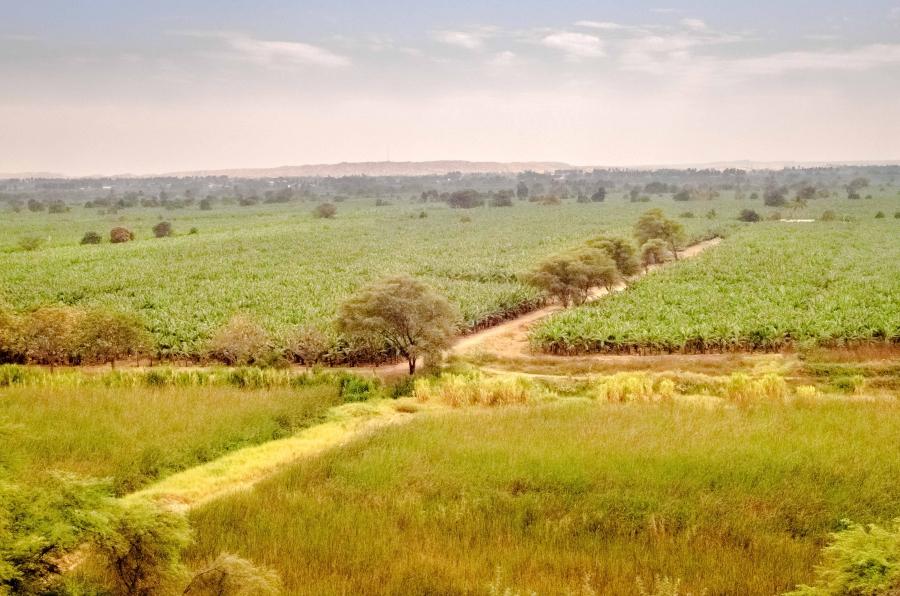 Piura farm lands