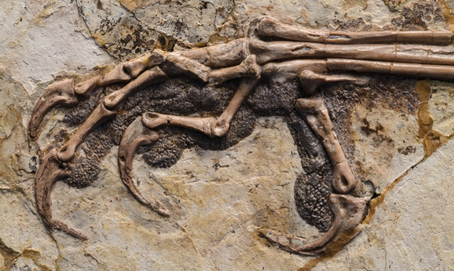 Coarsened pads protected the toes of Sapeornis chaoyangensis