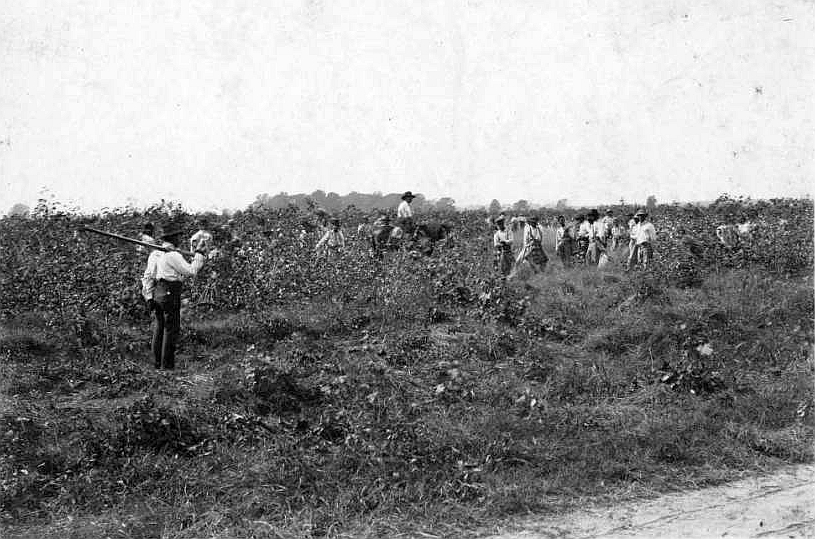 A black and white photo of laborers in a farm