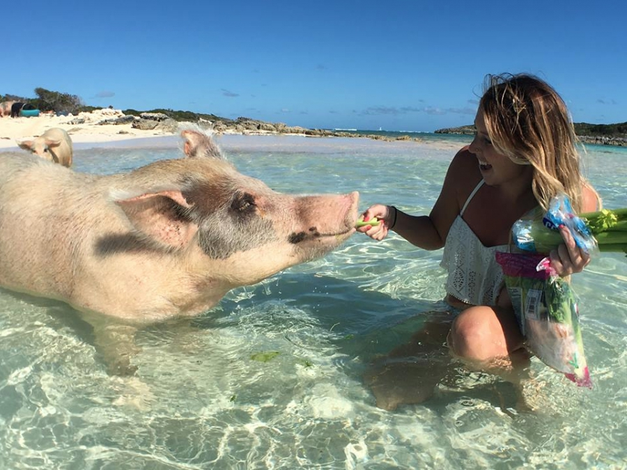 RIP swimming pigs — several of the adorable tourist-friendly
