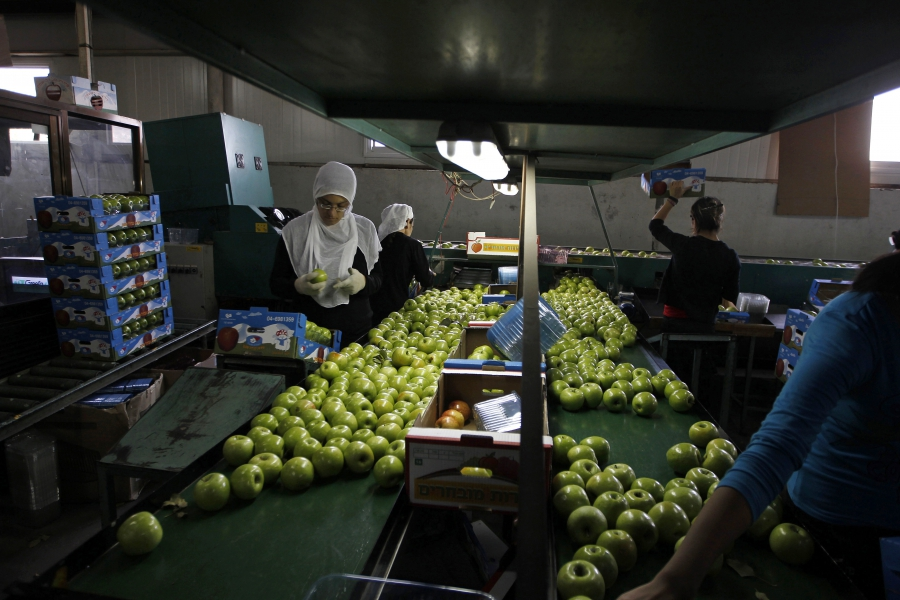 Workers pack freshly harvested apples at a factory near Druze village of Majdal Shams in the Golan Heights, Oct. 11, 2012.