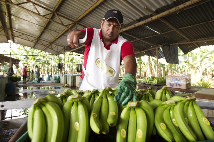 Ecuadorean banana's farm workers wash bananas during a packing process in Babahoyo.