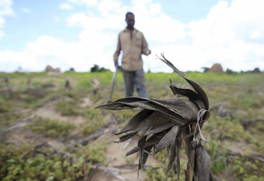 The UN World Food Program says about 14 million people face hunger across Southern Africa because of the current drought, including more than 10 percent of the population in Zimbabwe, where this farmer surveyed his withered corn crop in late January.