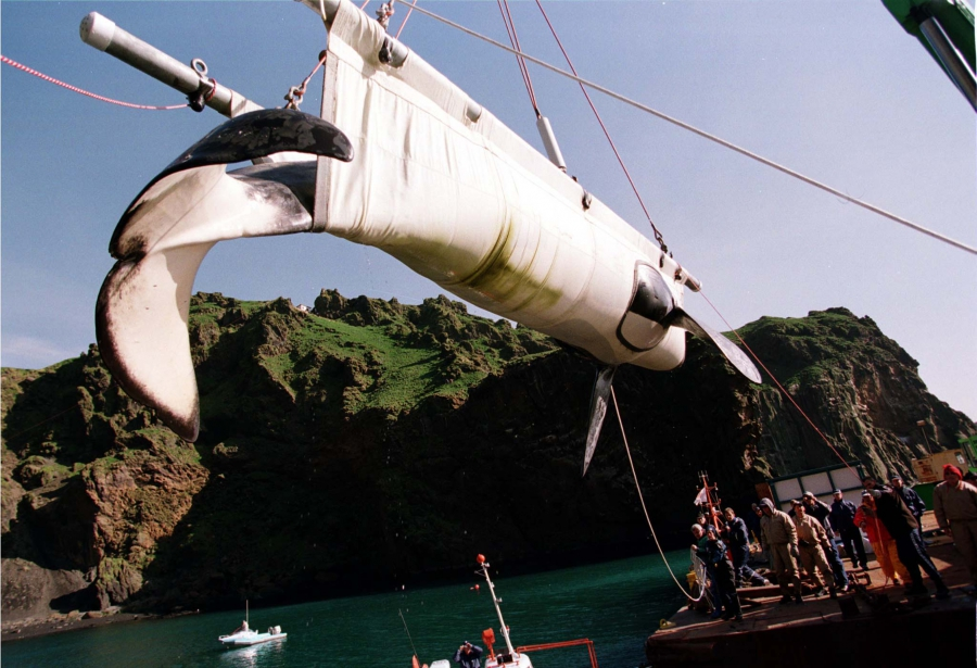 """Keiko, a 5-ton killer whale best known for the """"Free Willy"""" movies, is lowered into a pen in Icelandic waters"""