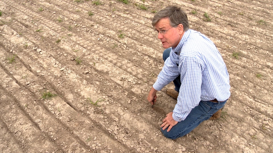 Drought has forced Texas rice famer Ronald Gertson to drill wells to get enough water to plant his crops. The irrigation canals that normally feed his farm are dry.