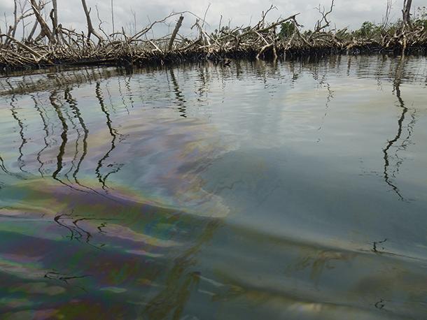 Shell oil slick mangrove