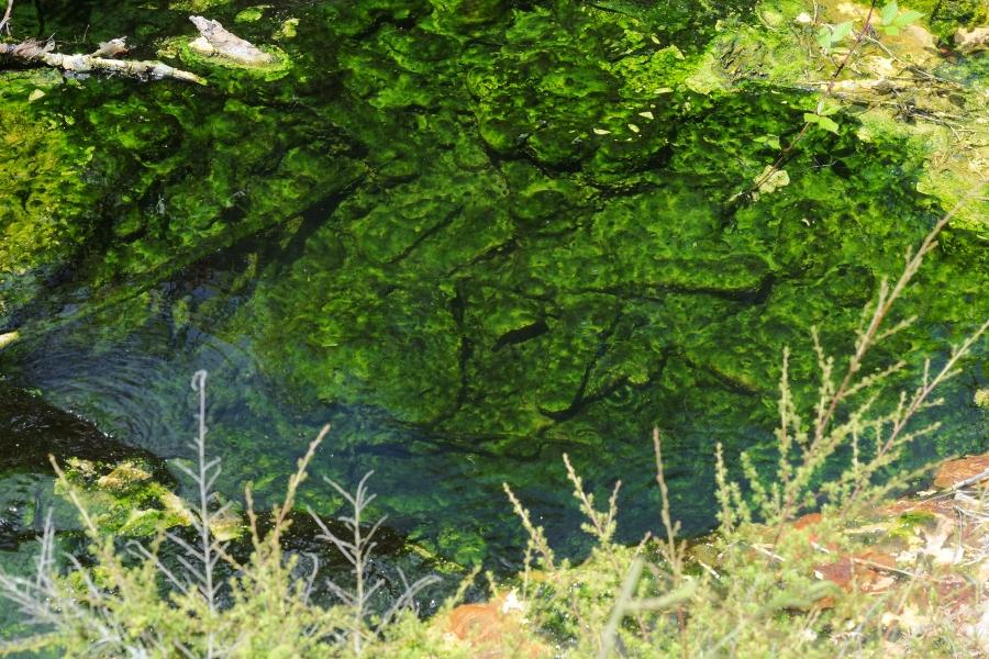 Satellite photo of algae bloom in Lake Erie
