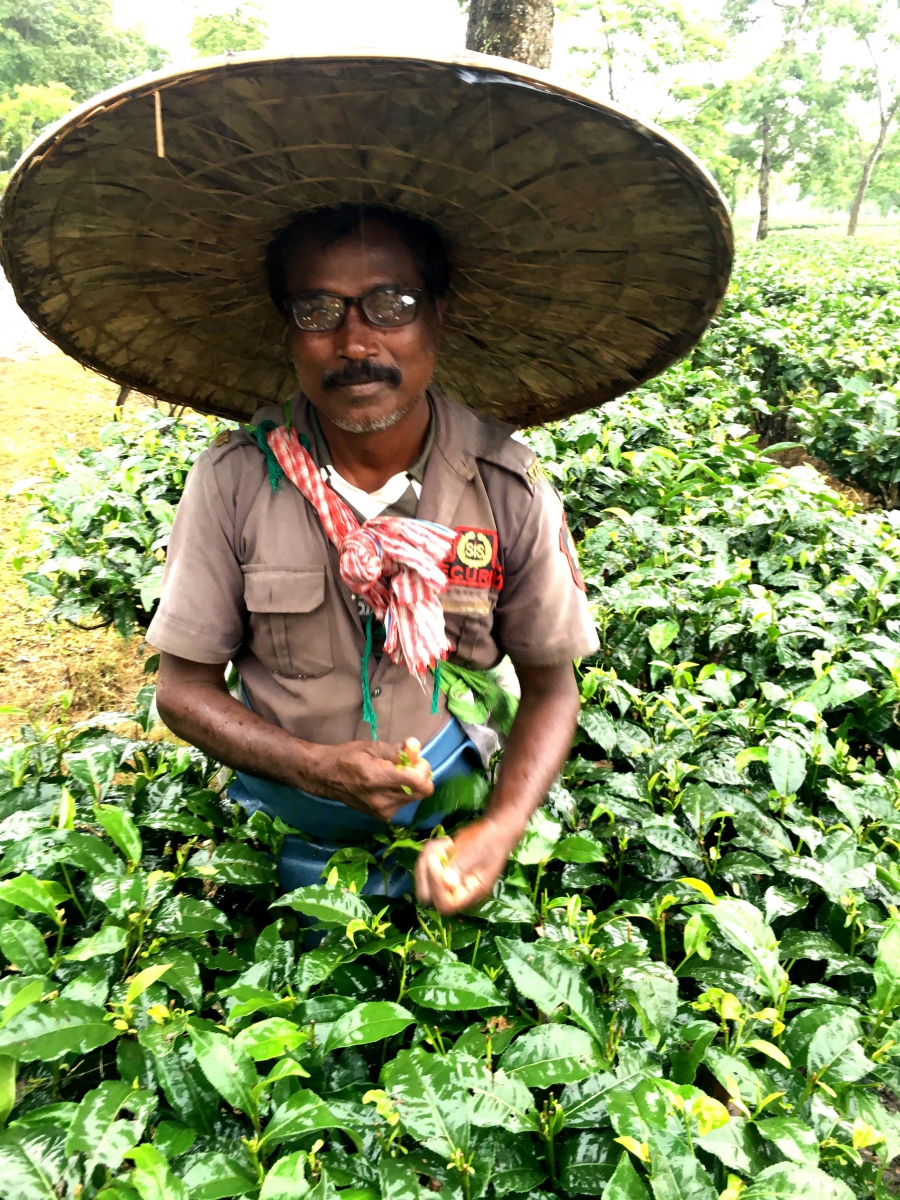 Tea worker with new glasses