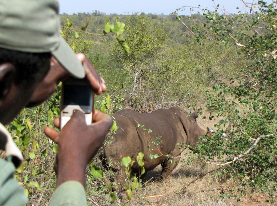 A local takes a photo of Rhino after it has been treated by Rhino Rescue.