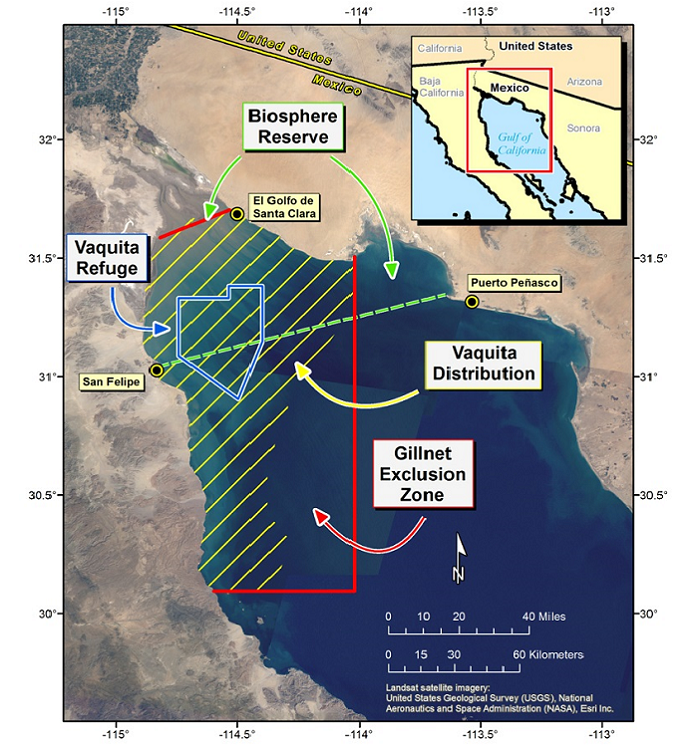 This map from the US National Oceanic and Atmospheric Administration (NOAA) of the northern Gulf of California shows vaquita habitat, a vaquita refuge, and the gillnet fishing exclusion zone.
