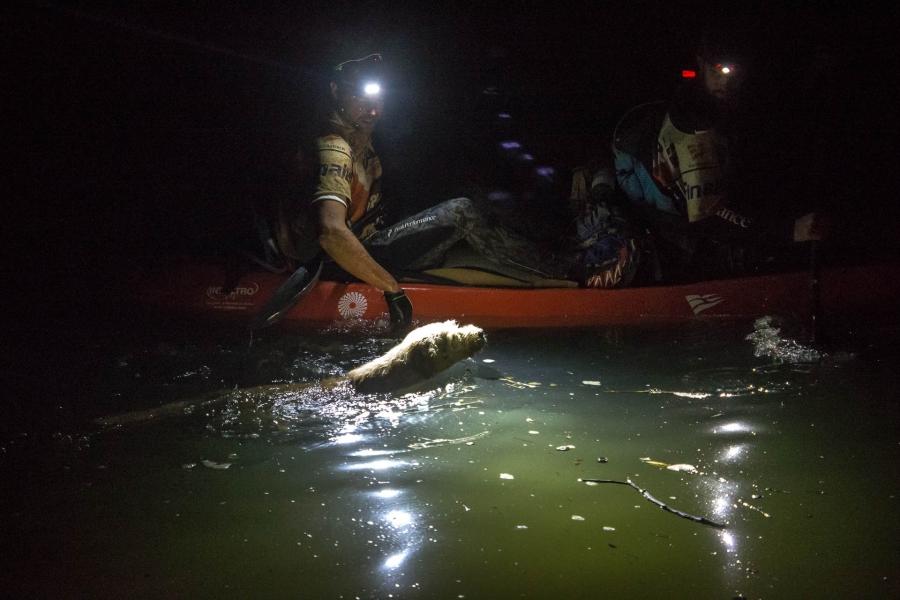 Arthur swimming next to Lindnord's kayak.