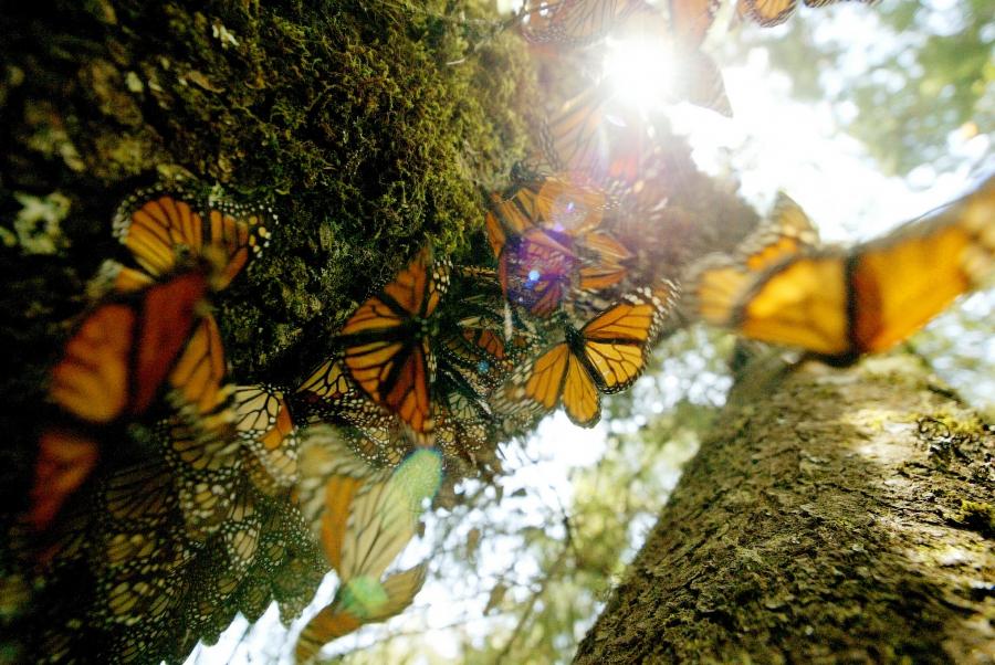Butterflies on a tree