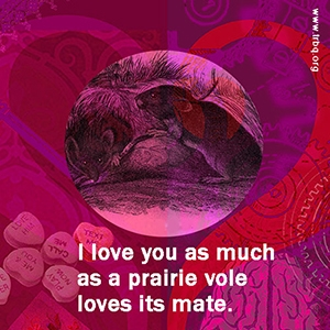 I love you as much as a prairie vole loves its mate.