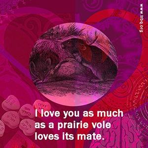 I love you as much as a prairie vole loves its mate.