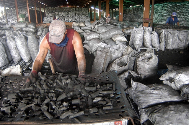 Workers in Ciego de Avila,  Cuba prepare shipments of marabu charcoal for export.