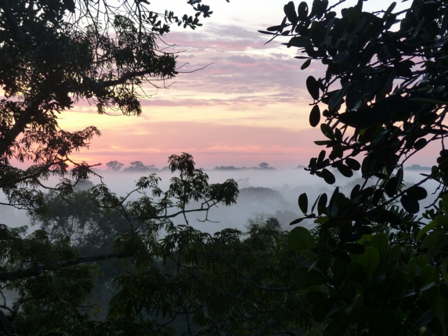 Dawn from tree canopy
