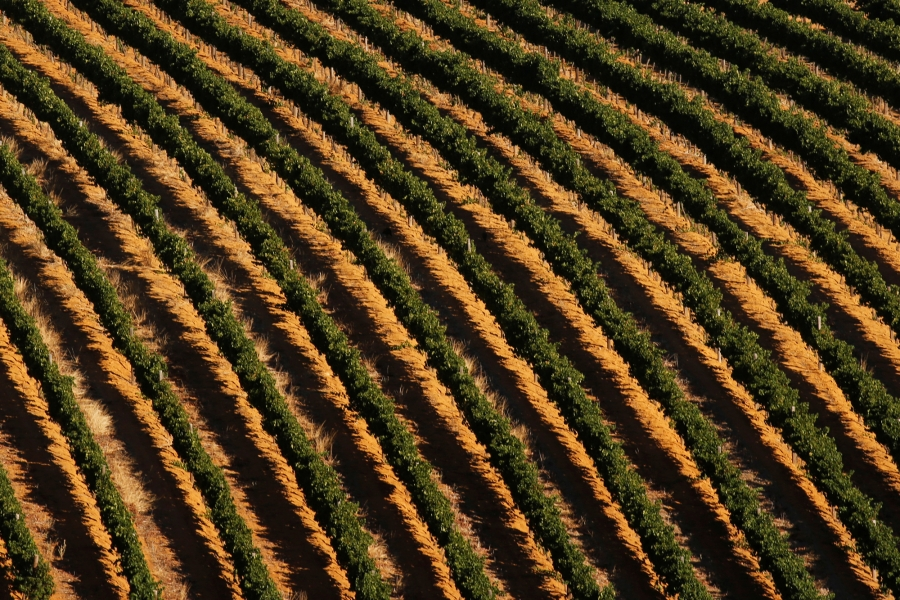 Vineyards are seen near Cape Town, South Africa, Feb. 3, 2018.