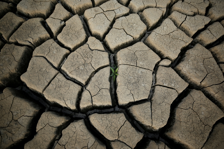 A plant grows between cracked mud in a normally submerged area at Theewaterskloof dam near Cape Town.