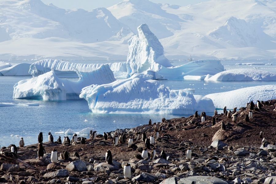 Penguins are seen on Curverville Island