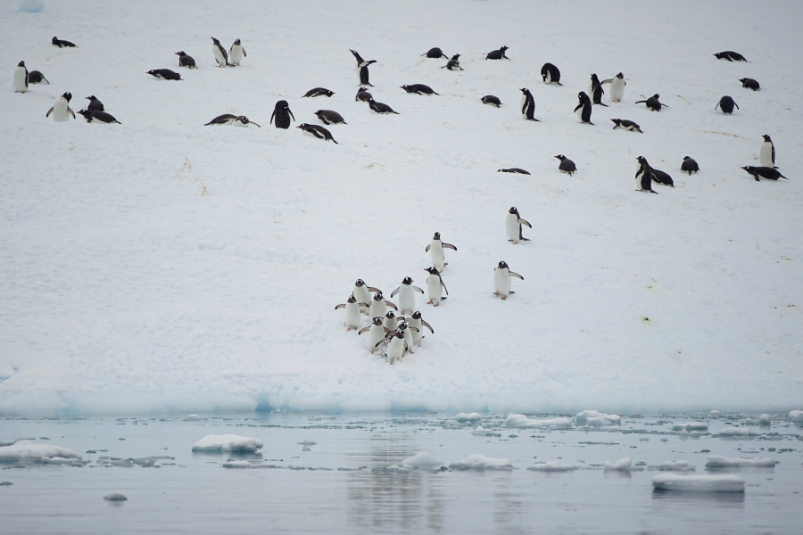 Penguins are seen over an iceberg in Andvord Bay, Antarctica.