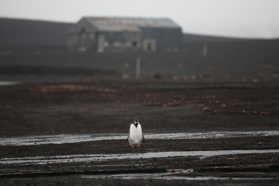 one penguin