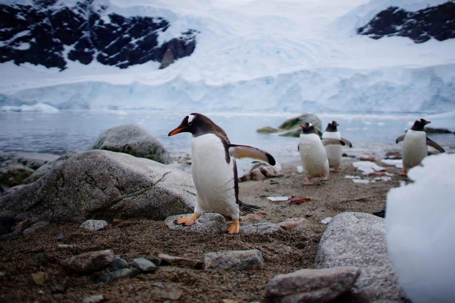 Penguins in Neko Harbor.