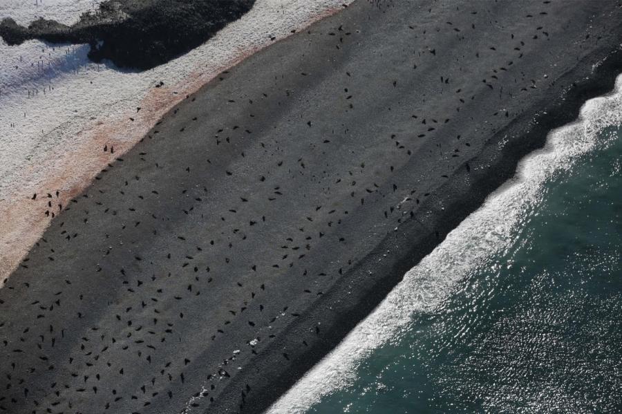 Seals on a beach in Half Moon Bay.