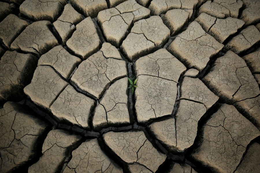 A plant grows between cracked mud in a normally submerged area at Theewaterskloof dam near Cape Town, South Africa, Jan. 21, 2018.