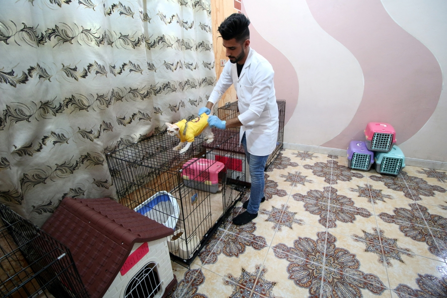 A veterinary medicine student puts clothes on a cat in a cat hotel in Basra, Iraq, March 13, 2018.