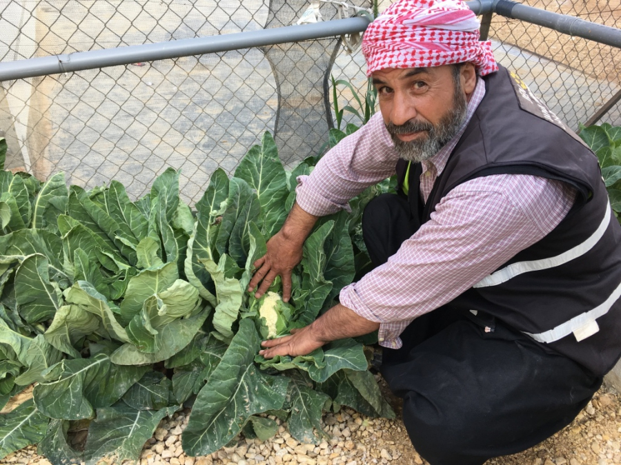 Abu Mohammad shows off his cauliflowers.
