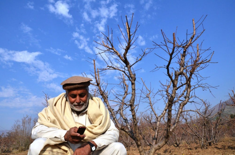 A Pakistani farmer reads a text alert on best farming practices.
