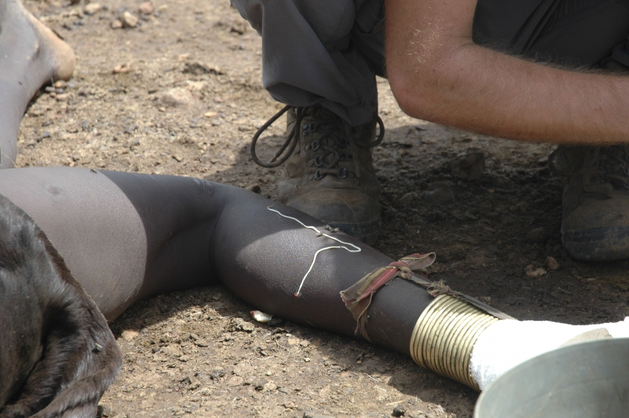 A guinea worm emerges from the leg of a South Sudanese girl in Juba in this picture taken in 2007. After living inside its host for up to 14 months, the long Guinea worm, a spaghetti-like waterborne parasite up to three feet long, releases chemicals to so