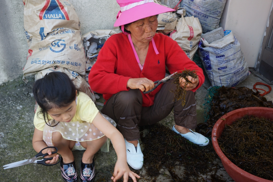 Kyung Ja Hong with her 8-year-old granddaughter, snipping seaweed from the day's catch.