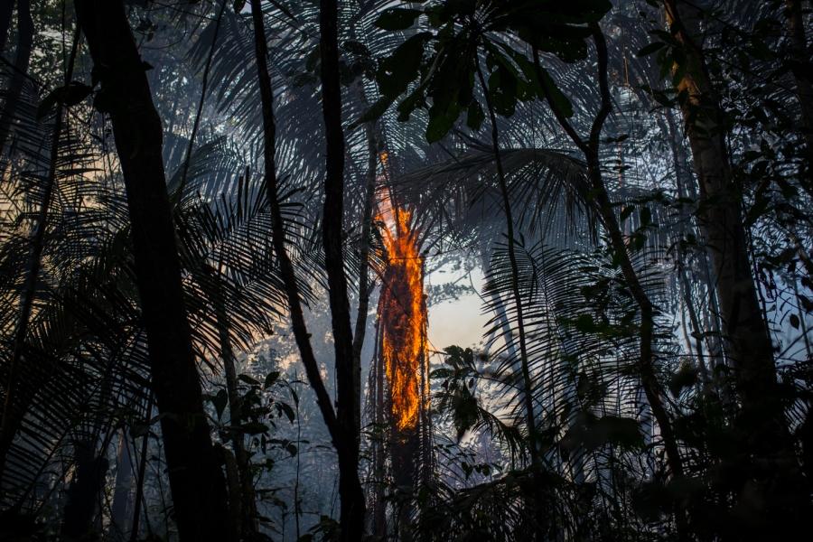 A tree burns in Colombia's Amazon region.