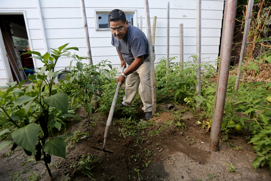 Man in small garden stand with a hoe, tills soil