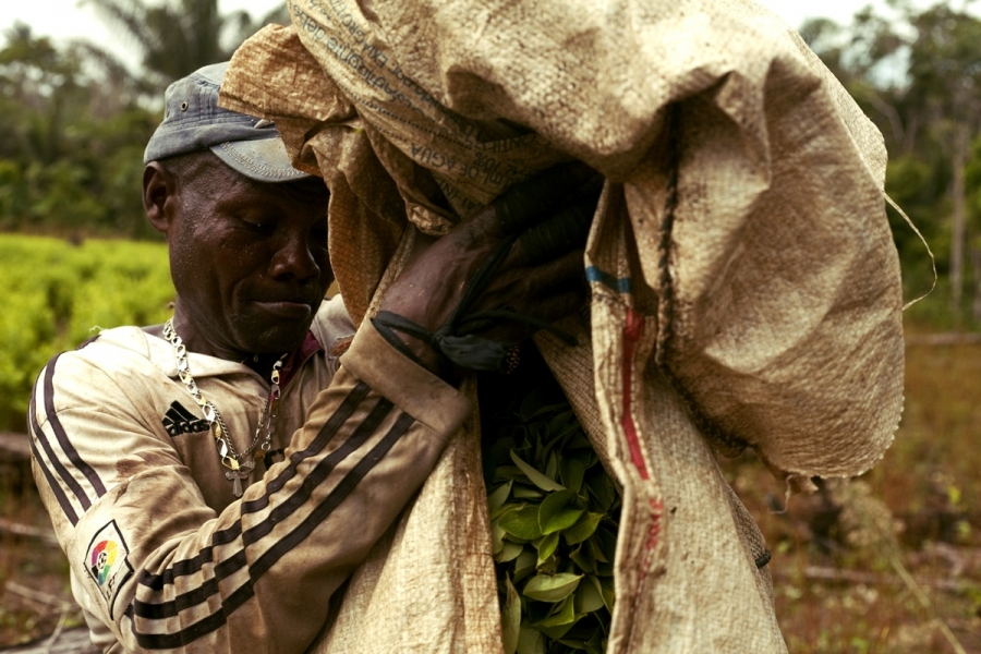 coca leaf farmer holds a bag of leaves in Colombia