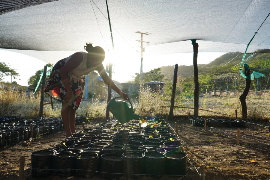 A woman from the Wayuu tribe who is part of the growing initiative waters the saplings with sun behind her