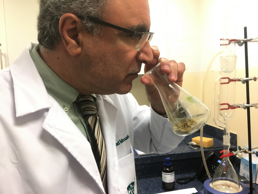 a man in a lab coat smelling cannabis from a. test tube