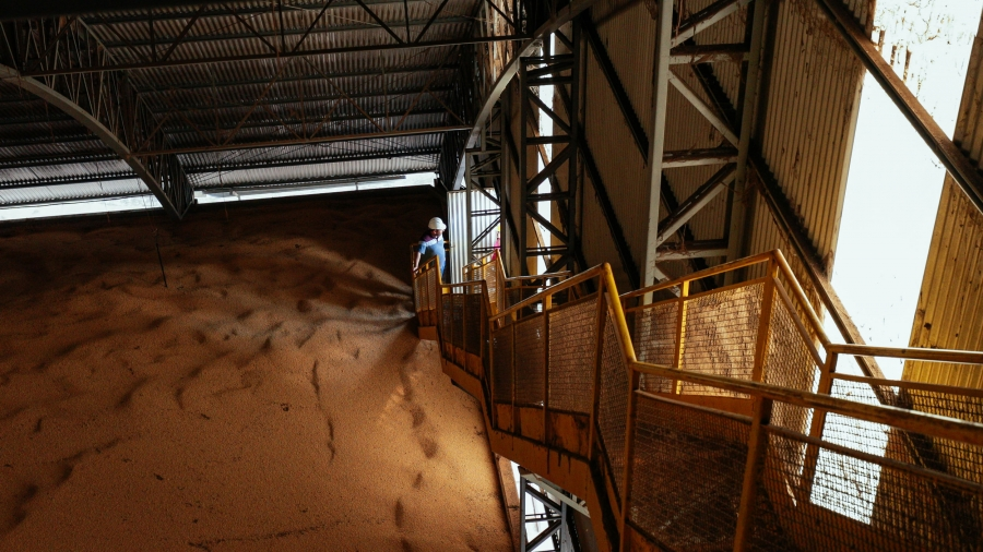 A man stands at the foot of a long staircase. To his right, piles of dried soybeans fill the inside of a grain silo.